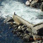 released in open water