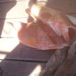 grouper, hog fish and snapper