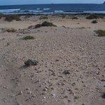 Playa con muchas conchas