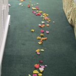 Rose petals on ground.