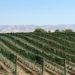 Famous Walla Walla vineyards