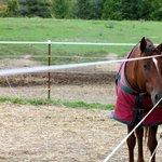 One of the horses: Sadie!