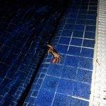 Un pequeño amiguito de noche en la piscina