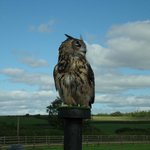Hawkridge Birds Of Prey