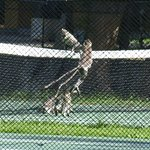 The playful monkies on the tennis court