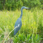 One of the birds viewed at the preserve at Seahorse Key
