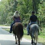 rental horses