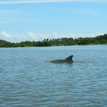 Meandering dolphin