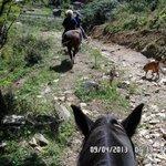Horseback ride from Banner Elk stables