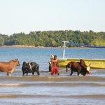 Einmal in der Woche kommen die Einheimischen an den Strand und waschen ihre Zebus