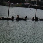 Sea lions we saw during our tour.