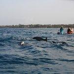 Course aux dauphins