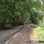 Dolgoch Station.