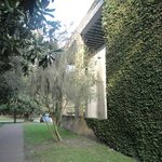 Beautiful ivy covered building