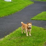 Guided walks by the little dog!!!