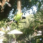 wild parrots in courtyard
