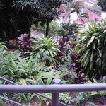 vista do jardim da entrada