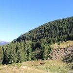Transalpina - descending