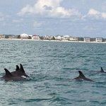LOVE the dolphin tours with Capt. Mark of Blue Water Adventures!!!!! Have gone 7 times and every