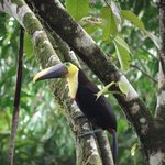 Toucan - taken from our cabana
