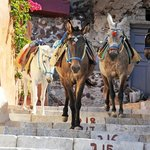 donkeys on way down to the port