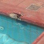 tiles around the pool