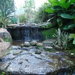 A tranquil waterfall enhances the duck enclosure