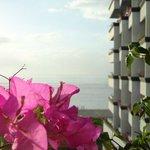 Flowers on my terrace