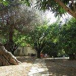 Althea Village Fruit Trees