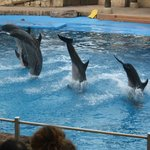 You must go to uShaka Marine world!