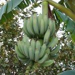 Fresh fruit on grounds