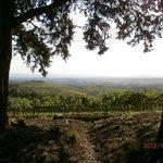 Recordando la bella Toscana, Italia...