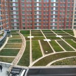 The eco Green roof top