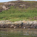 Summer Isles with seals