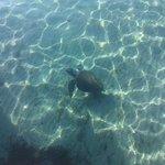 Skilepadde ved havna