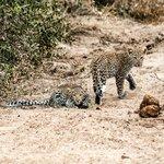 Adorable leopard cubs