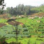 vegetable farms