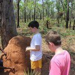 mmm yum a termite mound tasting!