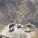 colca canyon richting liahuar en gaisers