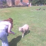 meeting a sheep {he was lovely and friendly}