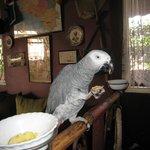 le perroquet cook