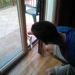 Gattino che vuole entrare in camera