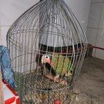 Le perroquet de la maison