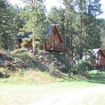 Timber Haus Cabin