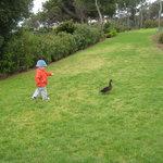 Un pato, compañero de jardín