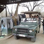 Fill up on game drive