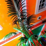 Bright tropical colors