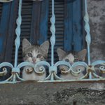 Kittens on balcony above taverna