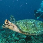 une tortue verte