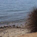 la plage et l'eau claire